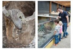 Fotowalk in Reptilien-Zoo